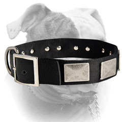 Extra wide nylon collar with nickel plated hardware for American Bulldog