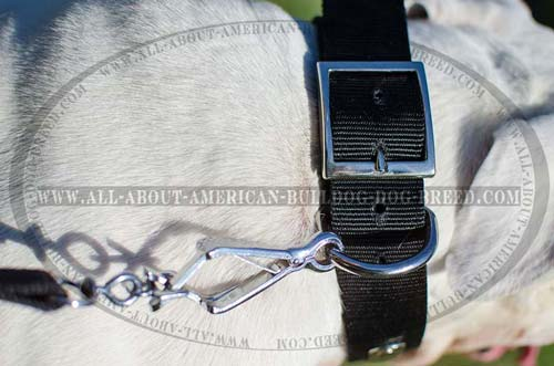 Nickel plated hardware for nylon American Bulldog collar