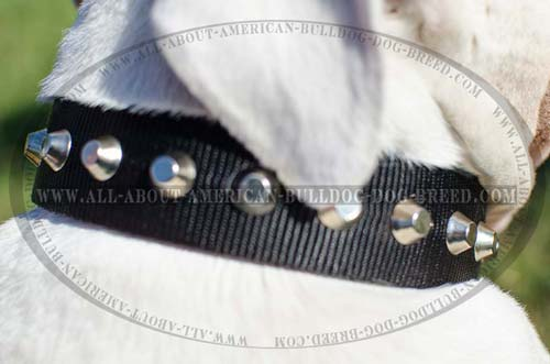Nickel plated pyramids for nylon American Bulldog collar