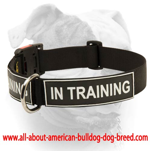 Beautiful American Bulldog Identity Collar - Nylon Collar With Patches [C48  PO77