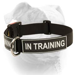 Identity Nylon Collar For American Bulldog