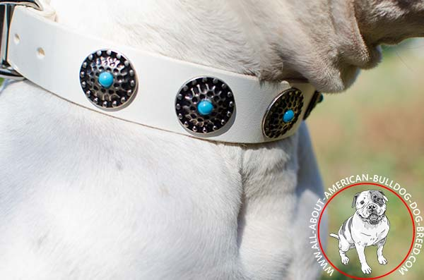 Circles with blue stones on white American Bulldog collar