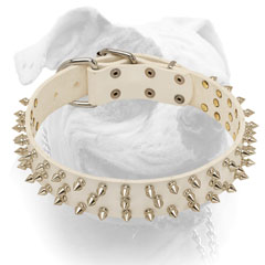 Elegant white leather American Bulldog collar with 3 rows of shiny spikes