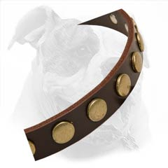 Fashionable Leather Collar With Metal Circles Decoration
