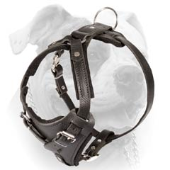 Durable Leather Buckled Harness For American Bulldog