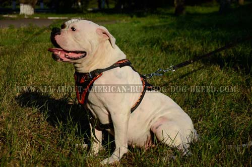 American  Agitation Harness/Handcrafted Dog Harness