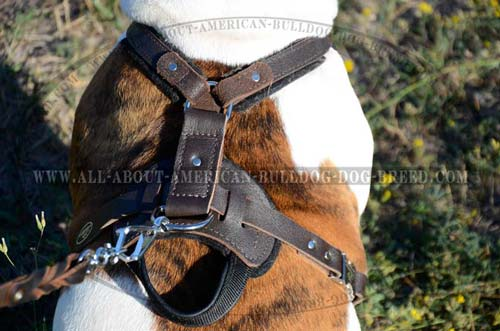 American Bulldog Leather Harness With Handle