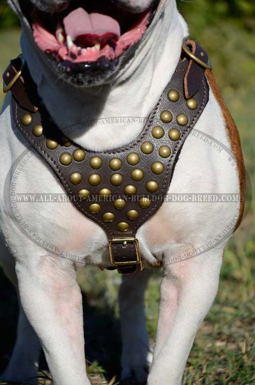 Everyday Leather Harness For American Bulldog