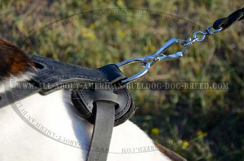 Leather Training Harness For American Bulldog