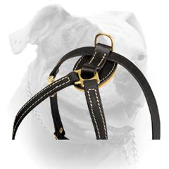 Lightweight Everyday Leather Harness For American Bulldog