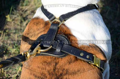 Stylish American Bulldog harness with rust-proof brass hardware