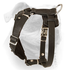 Decorated leather harness for puppies