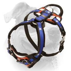 Leather American Bulldog harness with easy system of adjustment