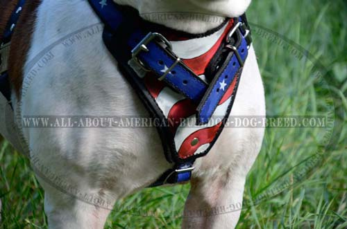 Wide chest plate handpainted for leather American Bulldog harness