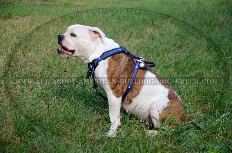 Perfect american bulldog rescue