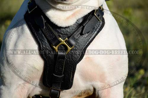 Wide padded chest plate with leather decoration for American Bulldog harness