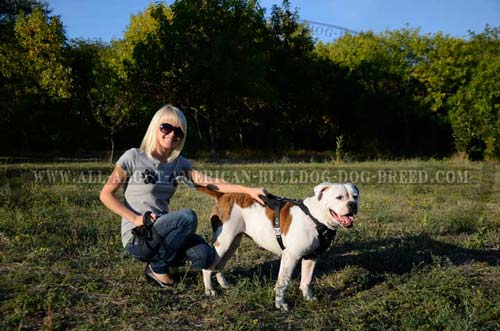 Strong durable handle for better controlling American Bulldog
