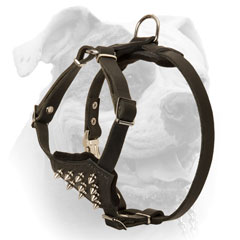 Leather harness for American Bulldog puppy