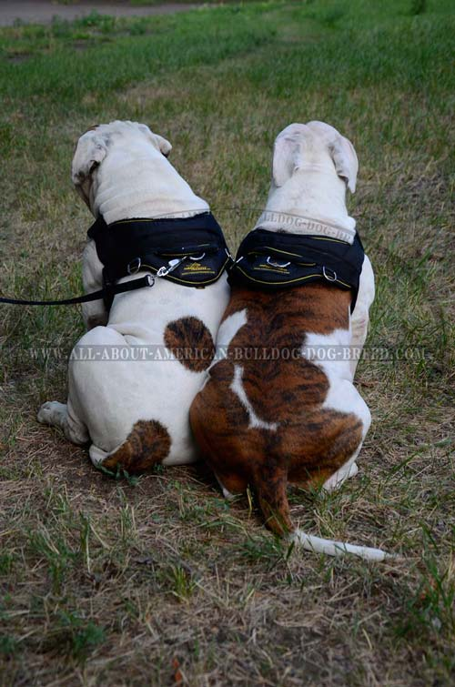 Soft reliable handle for nylon American Bulldog harness