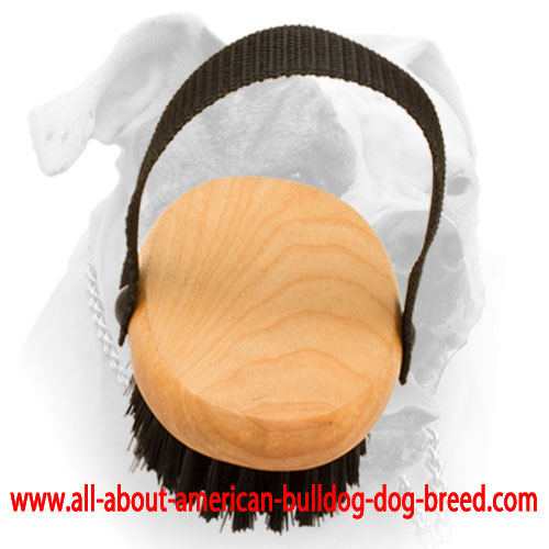 Bristle brush for American Bulldog everyday grooming