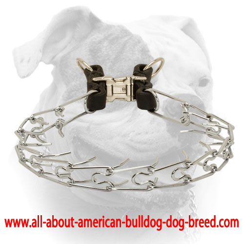 Corrosion resistant pinch American Bulldog collar 1/8 inch (3.25 mm) link diameter
