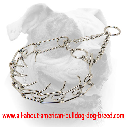 Chrome plated American Bulldog pinch collar - 1/6 inch (3.99 mm) prong's diameter