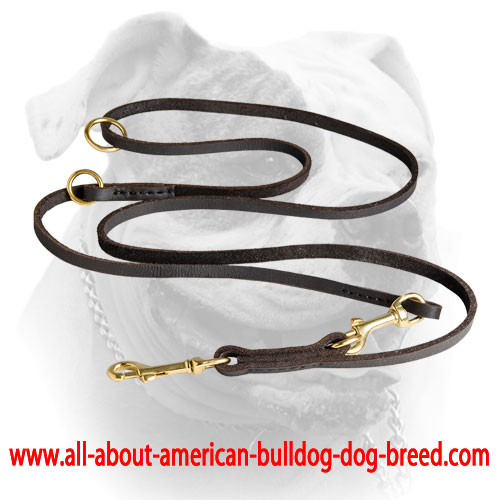 Brass hardware for reliable leather American Bulldog leash