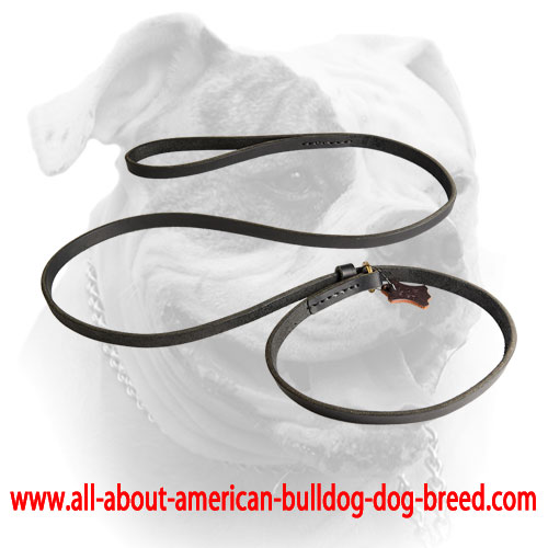 American Bulldog leash/collar combo with leather stopper