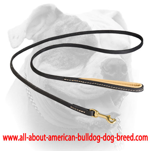 Elegant leather American Bulldog leash with stitched padded handle