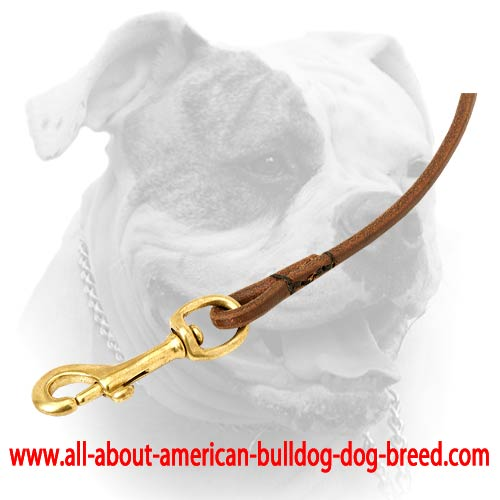 Dog show leather leash with brass snap hook for American Bulldog