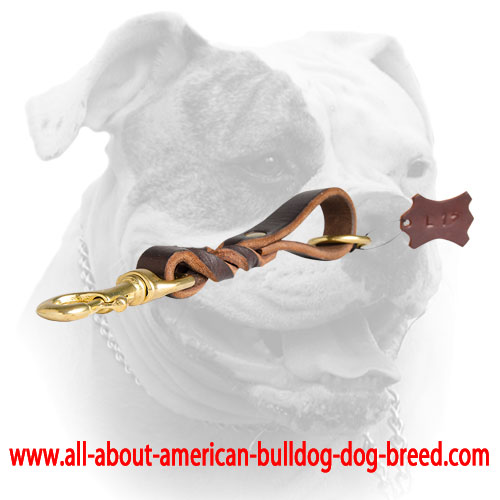 Short leather leash for American Bulldog with extra O-ring