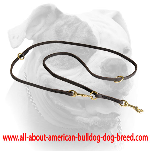 English leather American Bulldog leash with floating O-ring and two stable O-rings