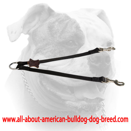 Walk 2 dogs simultaneously with this nylon leash coupler for American Bulldog