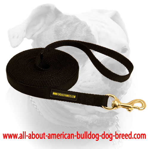 Brass snap hook for nylon American Bulldog leash