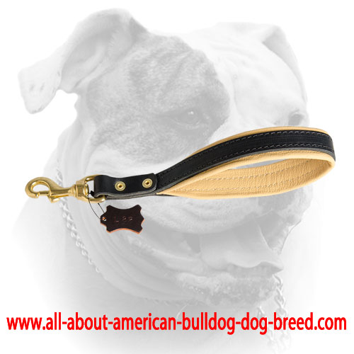 Soft Nappa padding for leather American Bulldog leash