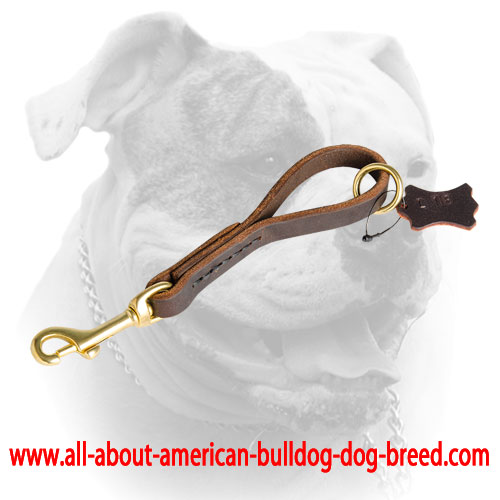 Short leather leash with O-ring for American Bulldog
