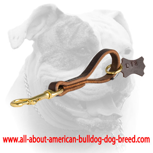 Stitched leather short leash for American Bulldog