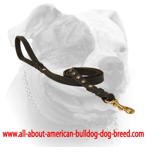 Short riveted braids for leather American Bulldog leash