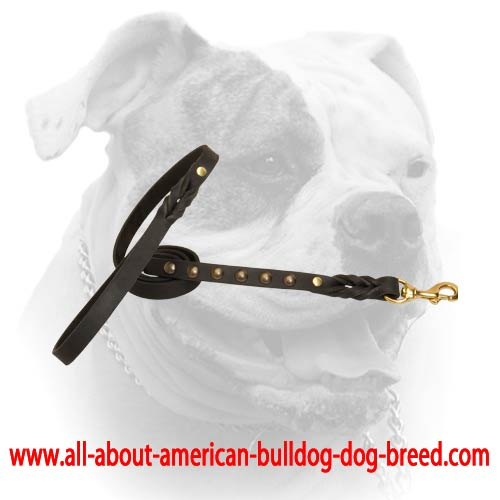Leather American Bulldog leash with brass studs