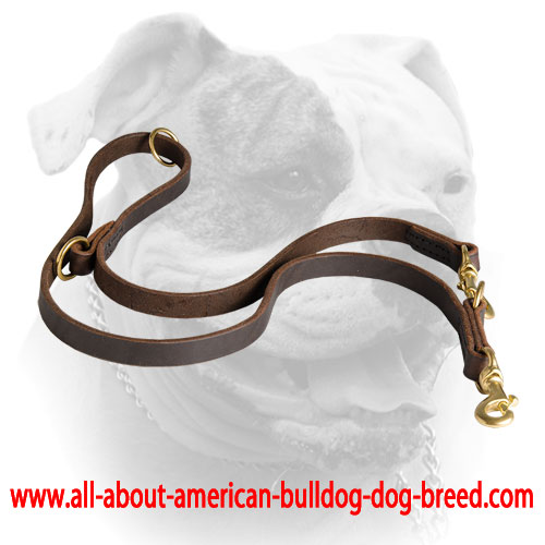 Genuine quality leather leash with brass hardware for American Bulldog