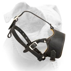 American Bulldog leather muzzle with adjustable straps