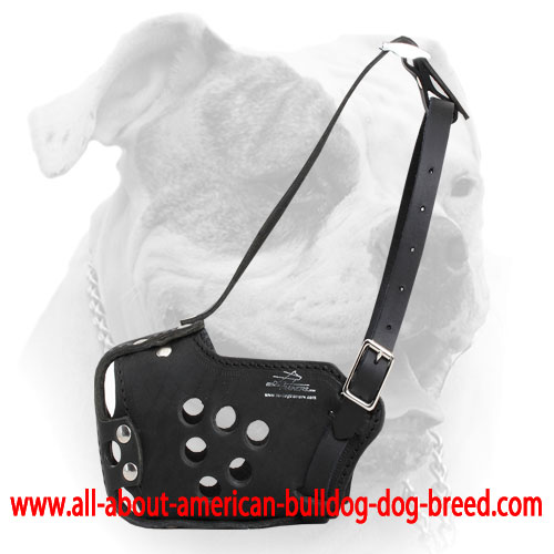 Perfect fit training muzzle for American Bulldog