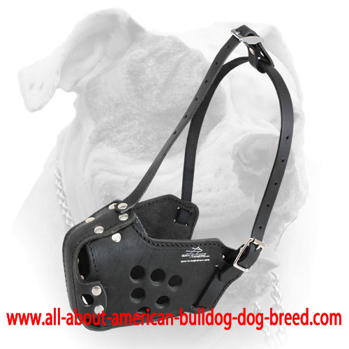 Anti-rubbing leather American Bulldog muzzle with special ventilation holes