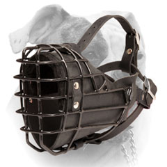 Leather American Bulldog muzzle fully padded