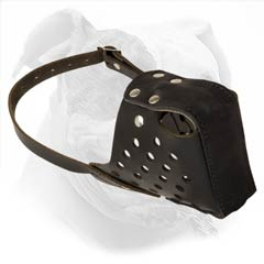 Secure Leather Muzzle For American Bulldog