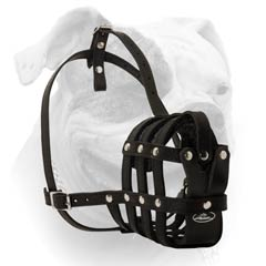 Roller Buckle Leather Dog Muzzle For everyday Use