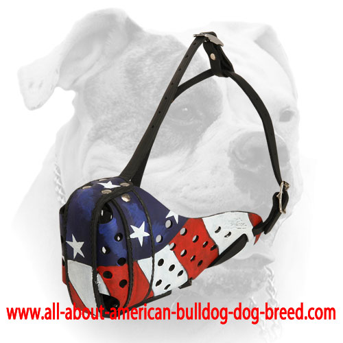 Special ventilation holes for leather American Bulldog muzzle