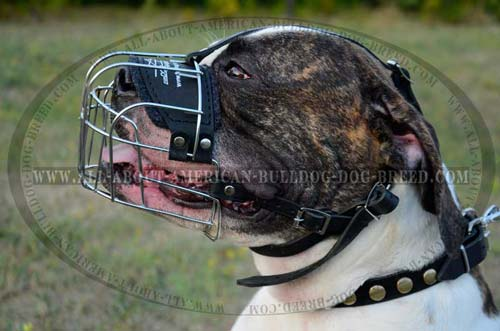 Wire Cage Buckled Muzzle For American Bulldog