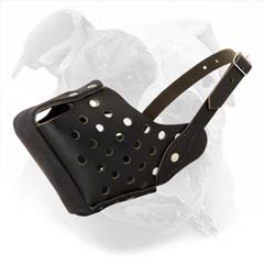 Everyday Walking Leather Muzzle For American Bulldog