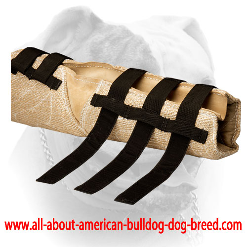 American Bulldog hidden bite sleeve with velcro straps